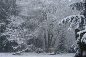 December Snow 2008 15 by Ozzyhelter
