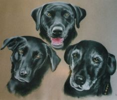 3 dogs by somniacscaper