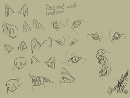 Wolf+Dog Anatomy Studies by Spike654