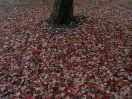 Autumn Leaves on the Ground by crotafang