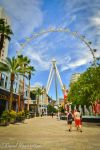 High Roller by RoseyShoots