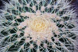 Plant Structures 1 by Aeffa