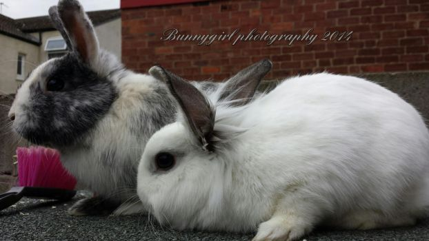 Harvey and Frosty (rip) by Bunnygirlphotography