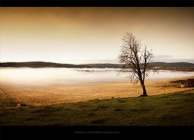 Autumn Glory by Stridsberg