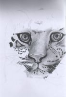 Wip-leopard sketch by heath23windle