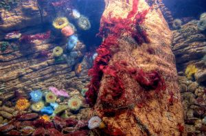 A Colorful Sea Garden HDR by Lula939