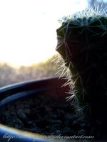 lonely cactus by DannyStar369