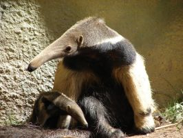 Baby anteater by Rhed-Dawg