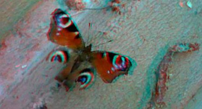 3D Butterfly Anaglyph by MechaTurles