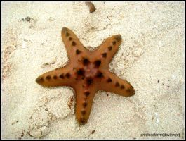 Starfish by princesskhym