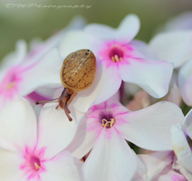 Snails love beauty to by Vitaloverdose
