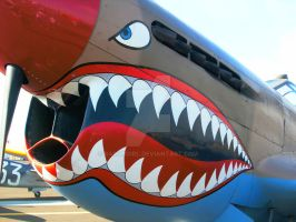 P-40 with Teeth by BaronGirl