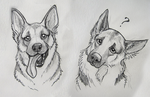 German Shepard sketches by Reenama