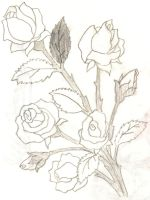 Roses by Riley7