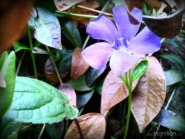 Spring Flower 2012 - 19 by Ingnition