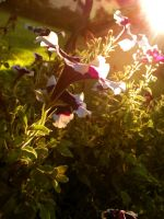 The Delicate Light Of Evening by POETRYTHROUGHLENS