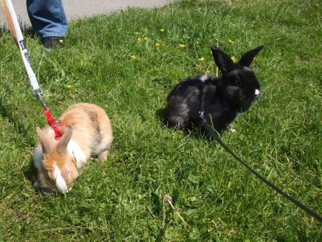 my rabbits outside by Justwelydia