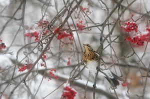 Bird in winter by Alhor-Ern