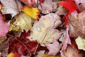 Fallen leaves. by Herbstfeuer