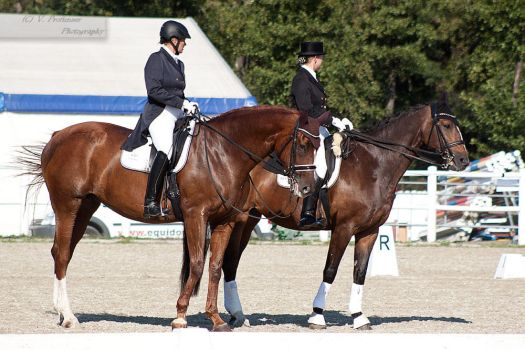 National Dressage and Jumping_177 by CalyHoney