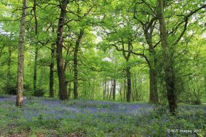 Swithland Woods by MichaelJTopley