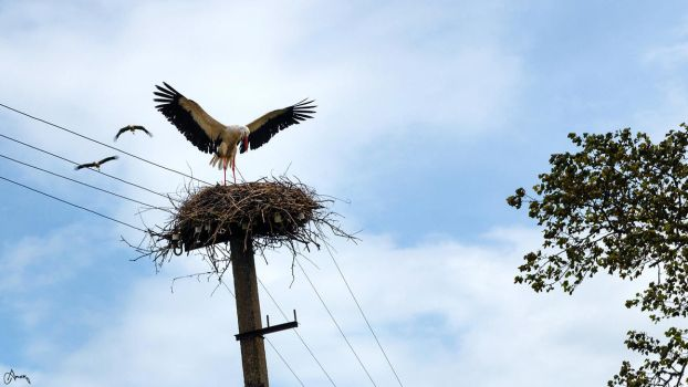 a Stork and a nest by Carnaga