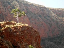 Ormiston Gorge by BradleyPitt