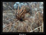Spikes by Morgor