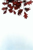 DownFall by Alexandru1988