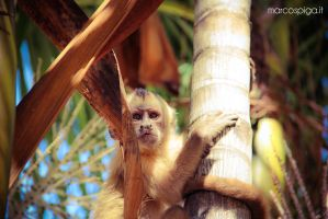 monkey in the jungle.. by marcospiga