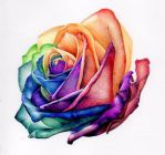 rainbow rose in biro / ballpoint pen by angelfaces1986