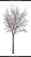 Bare Tree Cut Out by ManicHysteriaStock