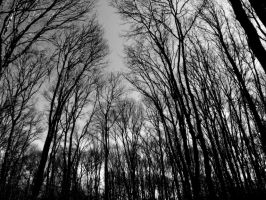Trees by grigant