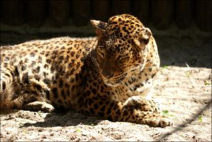 The Oldest Living Panther by Vertor