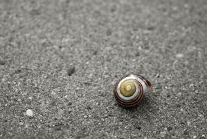 Snail Shell by LaChRiZ