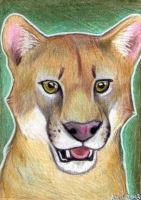 Cougar ACEO by Kqeina