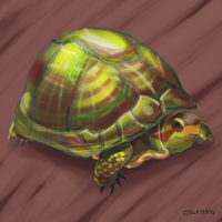 Turtle by CalSlater