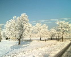 icy_trees by Rayashi