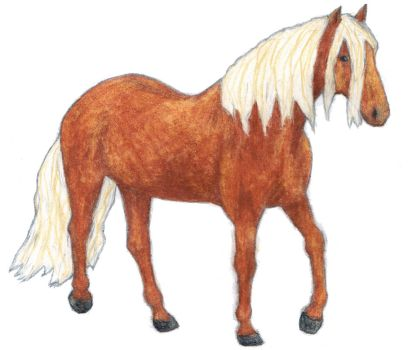Finnhorse done with watercolor pencils by elainelouve
