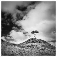 Solitary Tree by ReneAigner
