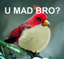 U Mad Bro? by Phenoca