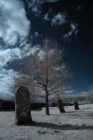 Infrared Tree, Kirkland by richsabre