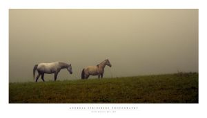 In the mist by Stridsberg