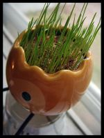 Oh My Little Plant by deconstructedstars