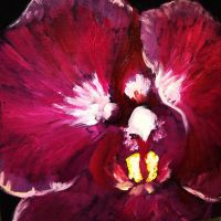 Graduation Orchid by heartMelinda