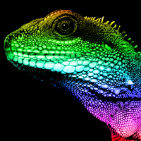 Rainbow Lizard by MrAngryDog