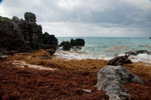 Bermuda 245 by FairieGoodMother