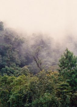 Misty day in Sierra Madre by calikal