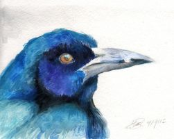 Grackle by NynjaKat
