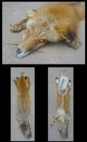 AK Red by Tricksters-Taxidermy